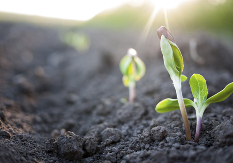 seedlings sprouting from ground