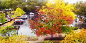 Rainy fall day in parking lot