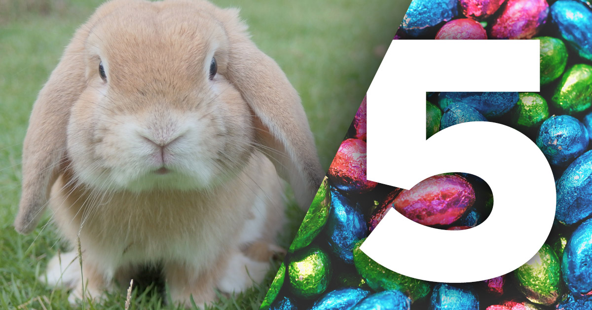 Easter bunny with number 5